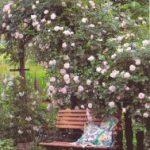 Gartenpflege im August: Rosen