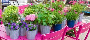 Unser Gartentipp im August