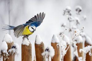 Gehölzschnitt und Vogelschutz