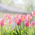 Frühling- Start ins neue Gartenjahr